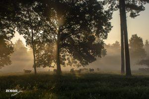 Mistige ochtend - Vuursteenberg [Wezep] 20170827 [9744]
