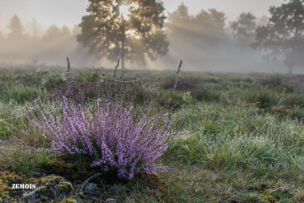 Mistige ochtend - Vuursteenberg [Wezep] 20170827 [9771]