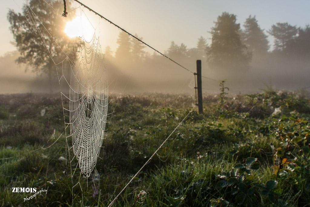 Mistige ochtend - Vuursteenberg [Wezep] 20170827 [9789]